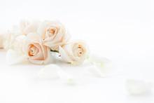 """Постер, картина, фотообои """"white roses and petals"""""""