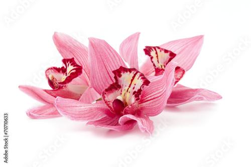Staande foto Orchidee Cymbidium orchids