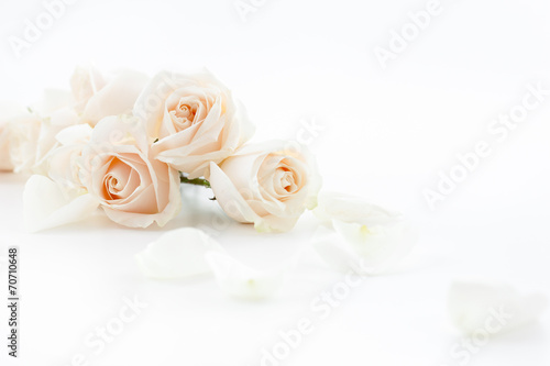 Aluminium Rozen white roses and petals