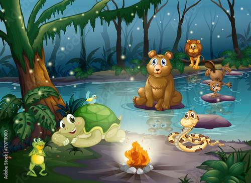 Animal and campfire - 70711000