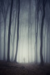 man walking on path through spooky dark forest - 70711487