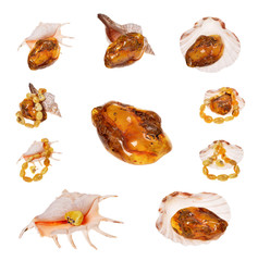 Baltic amber to Rapana snail on a white background