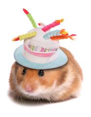 syrian hamster birthday