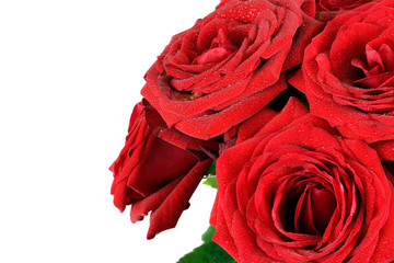 Red wet roses flowers isolated on white background.