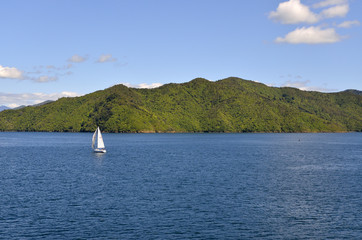 Sailing in Cook strait.