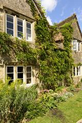 vine on stone cottage, Lacock