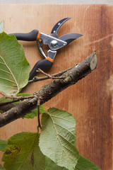 Branch and pruning shears