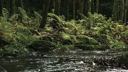 Wilder Fluss
