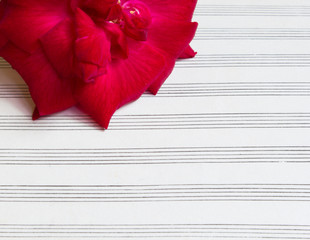 red rose on blank sheet music