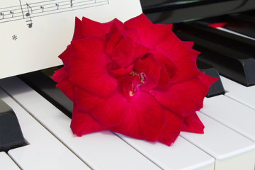 red rose on piano keyboard  with sheet music