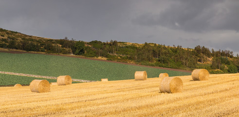 Hay Bales on a Field