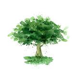 Fototapety Tree. Vector format