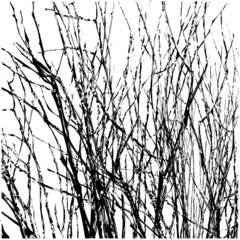 Tree Twigs Silhouette Vector