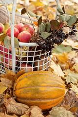 Тыква, яблоки и черноплодная рябина