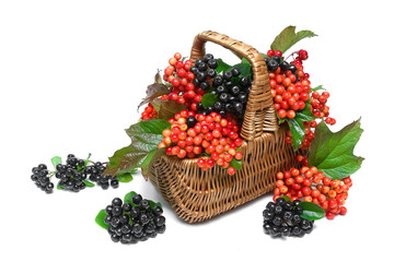 basket with berries of black chokeberry and viburnum on a white