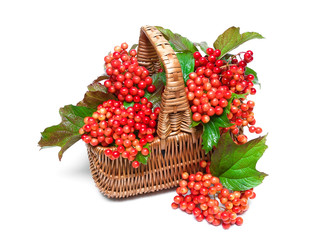 viburnum berries in a basket on a white background