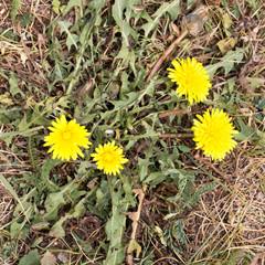 beautiful yellow flower in nature