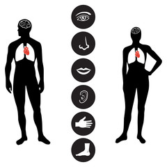 Medical Human body part icon