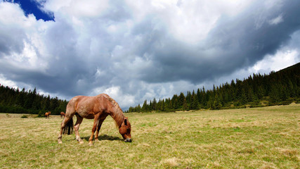 Horse in the mountains before the storm