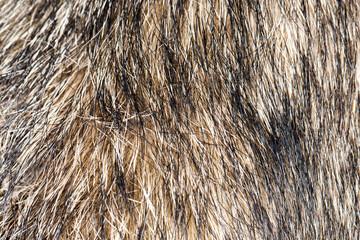 background of the dog's coat