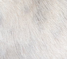 background of the dog's coat