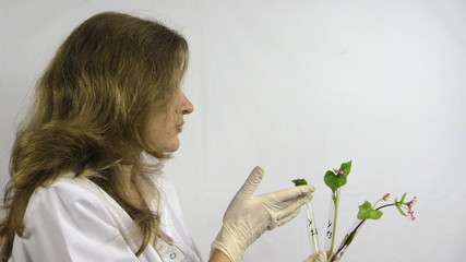 woman  watch buckwheat sprout in chemistry test tube flask