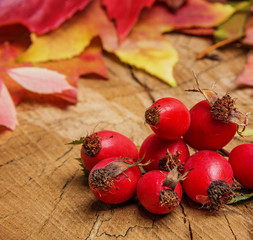 rosehips and autumn leaves