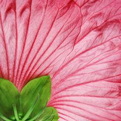 pink hibiscus flower - detail