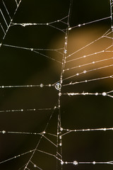 spider's web. close-up