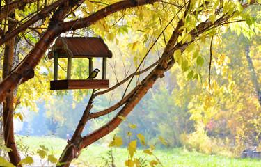 Осень в парке.