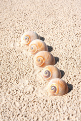 Five sea shells on the beach sand. Landsnail. Outdoors close-up.