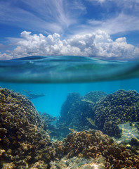 Above and below surface of the Caribbean sea