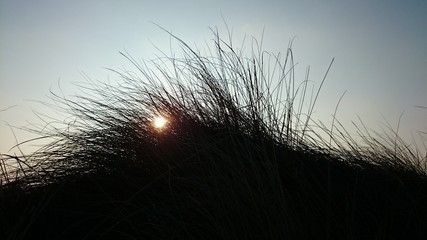 Vegetación de dunas en puesta de sol