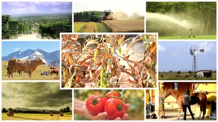 agriculture montage, people and animals in farmland