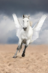 White horse with wings running free