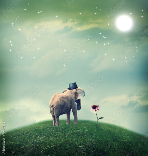 Fotobehang Olifant Elephant contemplating a flower