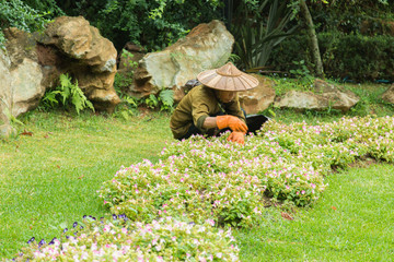 Gardeners are planting flower