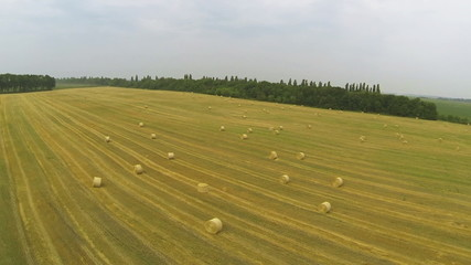 Flight over  slanted field with haycocks. Aerial  slow