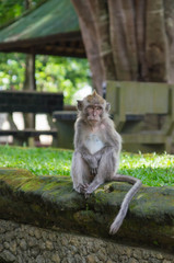 Monkey sitting on an ancient stone in park