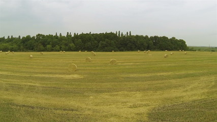 Picturesque haycocks on  yellow field. Aerial