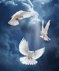 Dove in the air with wings wide open