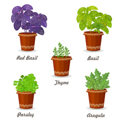 collection of herbs in a flowerpots