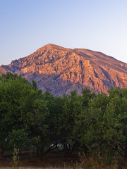 Olives and mountains at sunset, central part of Crete island