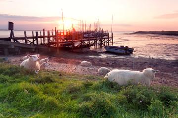 Schafe am Deich - Wattenmeer