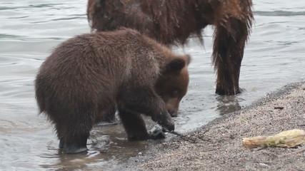 Bear breaks camcorder