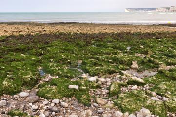 steinige Küste bei Ebbe in Nordfrankreich