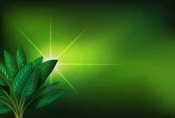 A green background with a plant