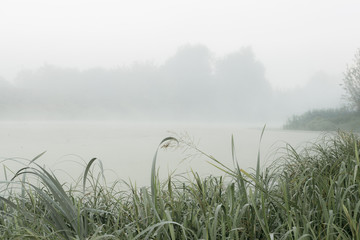 Foggy Morning in the Autumn Swamp