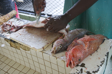 Fishing Market St Georges Grenada Carribean 01