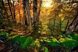 Fototapeta l'automne